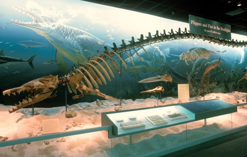 The Basilosaurus was in the Ancient Seas gallery from 1989 to 2008.