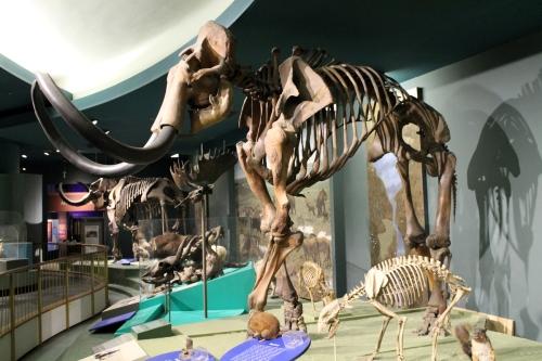 Chimera mammoth