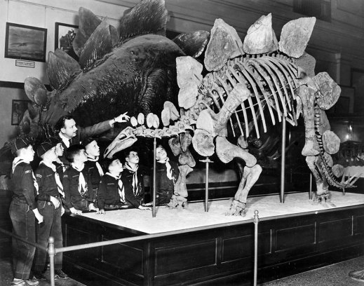 Stegosaurus fossil mount and life-size model circa 1913. Photo courtesy of the Smithsonian Institution Archives.