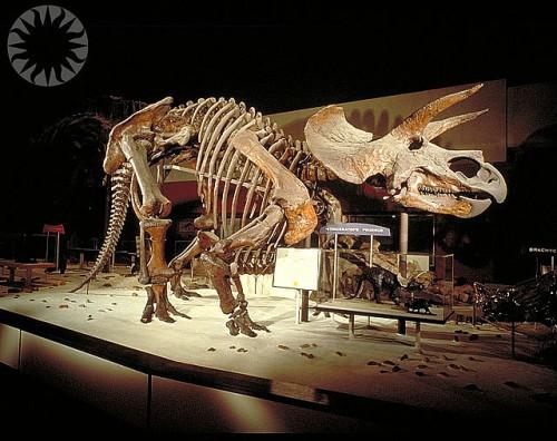 triceratops_1963