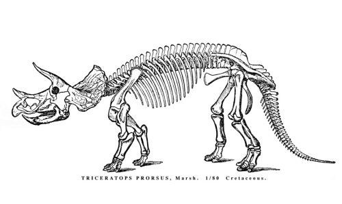 Marsh's 1891 restoration of Triceratops.