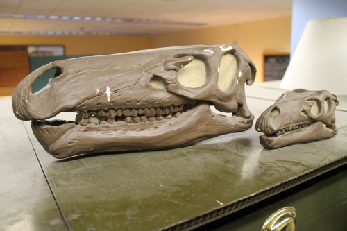 The retired plaster skulls of the original Camptosaurus mounts. Photo by the author.