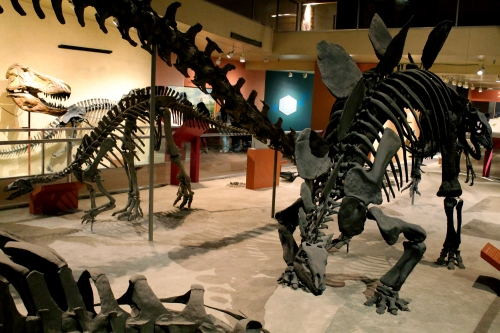 Cast of Stegosaurus and Camptosaurus. Photo by the author.