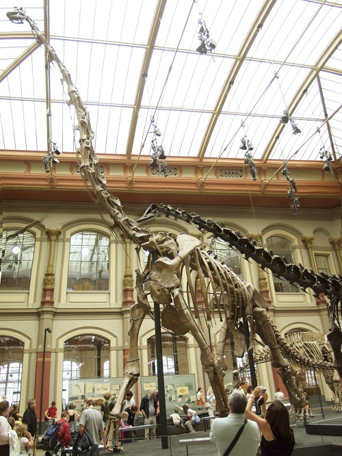 Should the Giraffatitan at Berlin's Museum fur Naturkunde be displayed in Germany? Image from Wikipedia.