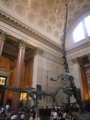 Allosaurus and Barosaurus mount in the Roosevelt rotunda of the American Museum of Natural History. Source: http://www.ourtravelpics.com.