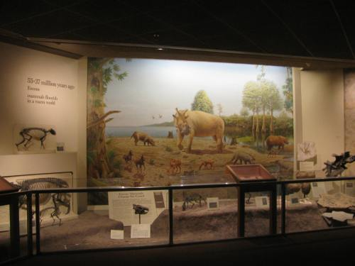 The Eocene section in the current Mammals in the Limelight exhibit, featuring mural by Jay Matternes. Photo by author.