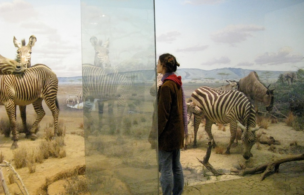 East African Natural History