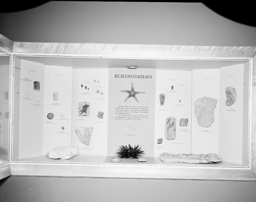 echinoderms1961
