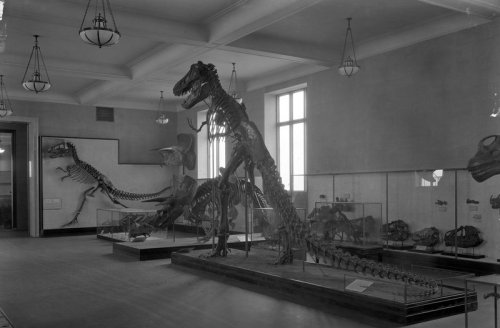 Tyrannosaurus and others in AMNH Dinosaur Hall, 1927. Photo courtesy of AMNH Research Library.
