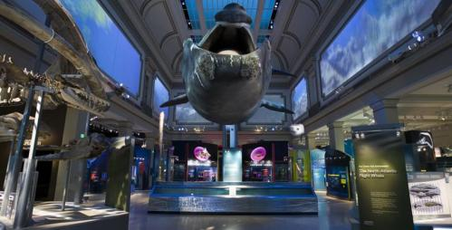 The new Ocean Hall at NMNH: a $90 million new museum extravaganza.