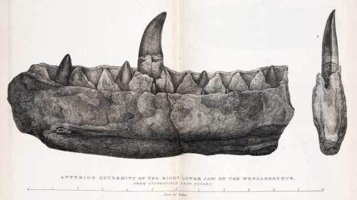 The partial jaw of Megalosaurus, the first named dinosaur.