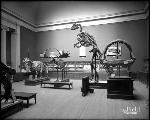Hadrosaurus cast on display at the Field Museum. Field Museum Photo Archives.