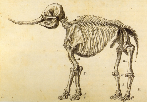 The Peale Museum mastodon, as illustrated by Charles Peale's son, Rembrandt.
