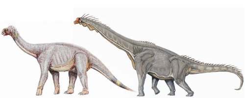 Both camarasaur and brachiosaur shaped Astrodon reconstructions are equally reasonable.