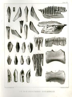 Astrodon teeth lower left.