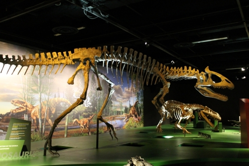 Visitors were having a hell of a time pronouncing Cryolophosaurus.