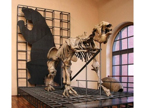 The original Megatherium fossils have been remounted at the Museo Nacional de Ciencias Naturales. Image from TripAdvisor.