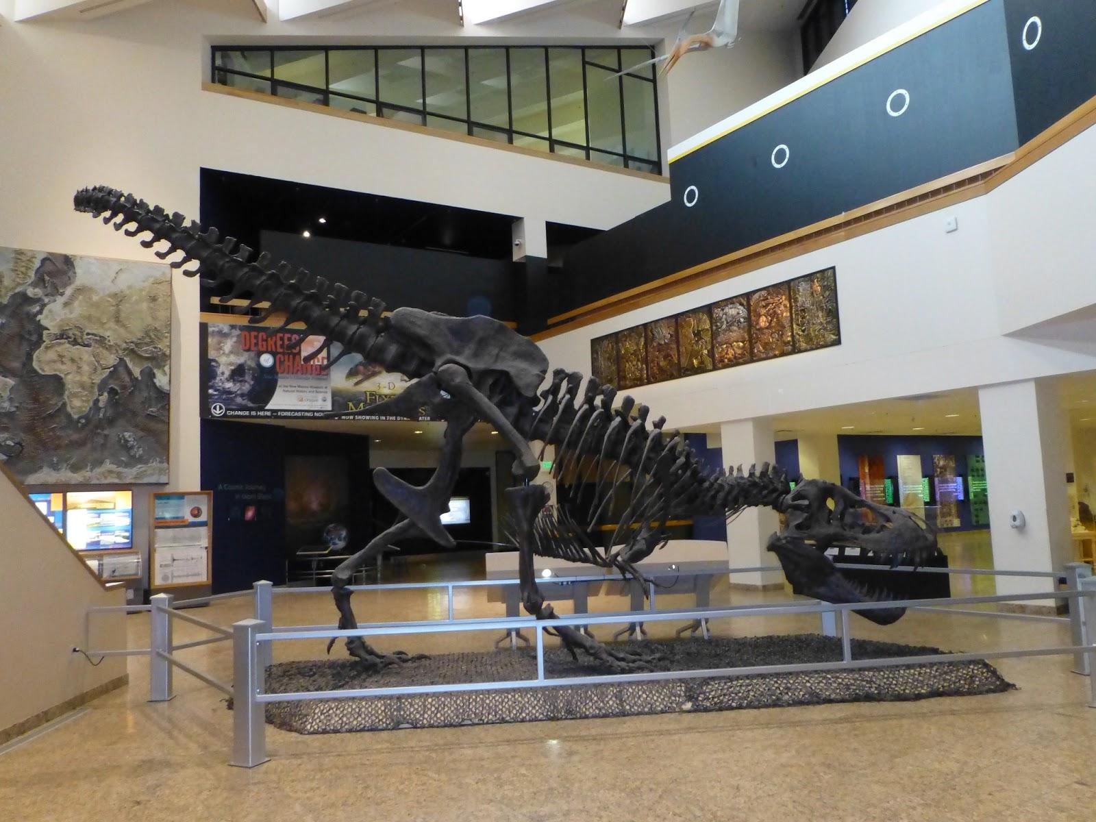new-mexico-stan jpgTyrannosaurus Skeleton In Museum