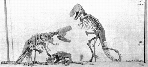 Model of unrealized T. rex showdown mount from Osborn 1913.