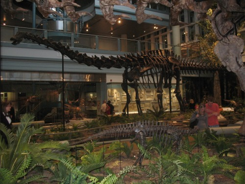"""The original """"Dippy"""" the Diplodocus at the Carnegie Museum of Natural History."""