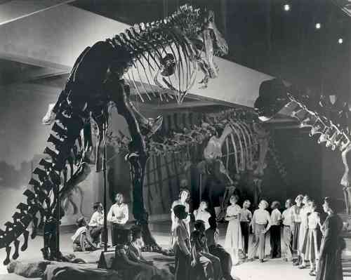 Carnegie Museum of Natural History. Photo from NPR.