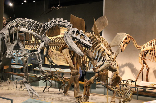 Stegosaurus and Allosaurus