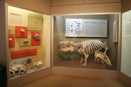 peabody mammals