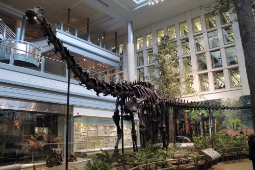 Original Diplodocus