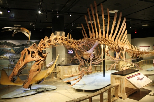 Spinosaurus!