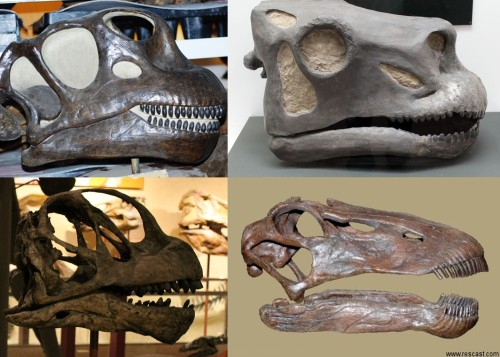 bully for brontosaurus essay Posts about bully for brontosaurus the late paleontologist stephen jay gould offered a remarkably nuanced view of both bryan and the trial itself in his essay.