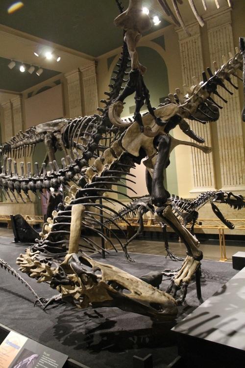 Torvosaurus scratches its jaw.