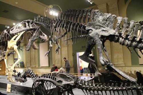 Acrocanthosaurus.