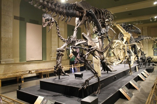 Nary an ornithiscian in sight. Photo by the author.