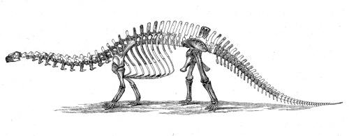 Marsh's Brontosaurus