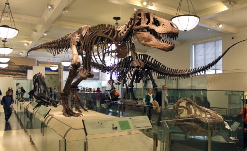 Hall of Saurischian Dinosaurs, American Museum of Natural History. Photo by the author.