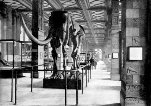 historic photo of mastodon