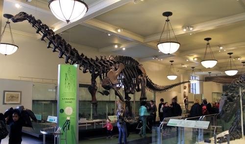 Apatosaurus remount