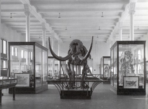 Hall of Fossil Mammals, around 1906.