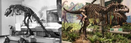 CMNH Allosaurus.
