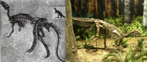 CMNH Camptosaurus.