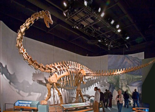 DMNH Diplodocus. Source