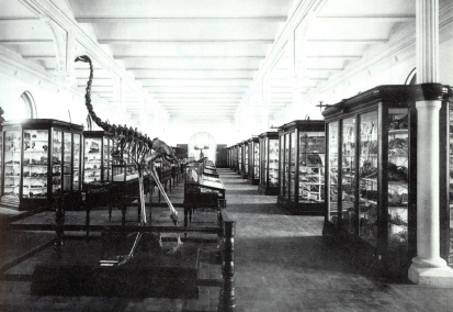 geology hall with moa