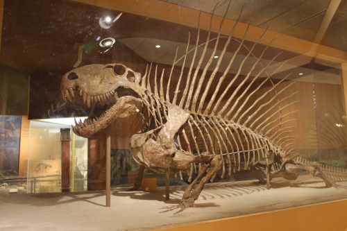 Dimetrodon in 2014. Photo by the author.