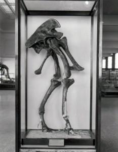 Allosaurus legs