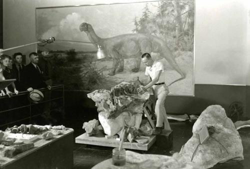 Boss prepares Camarasaurus