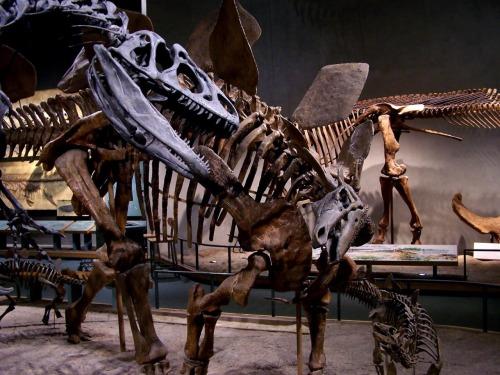 A close up of Allosaurus