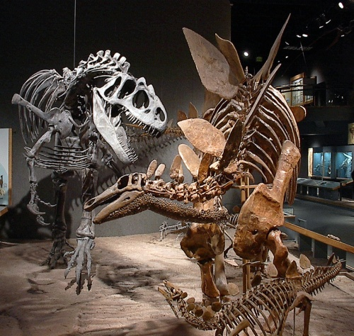 Allosaurus and Stegosaurus mount