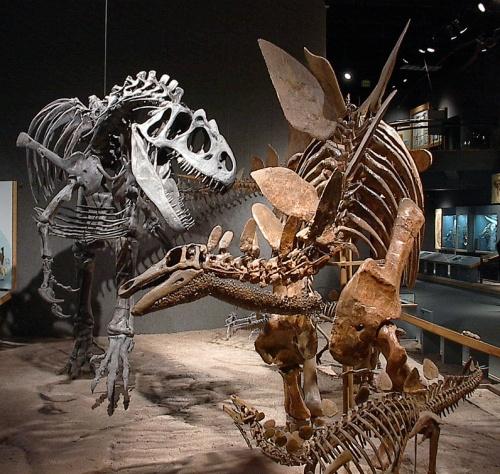 Allosaurus and Stegosaurus mount