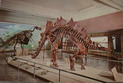 A postcard showing STegosaurus in the 50s