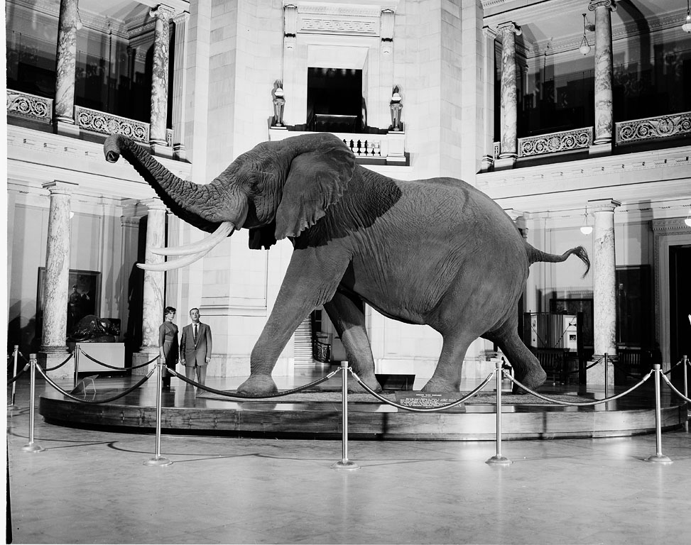 See the Elephant   EXTINCT MONSTERS